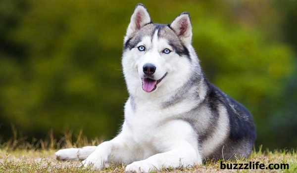 5 facts you should know about husky dogs