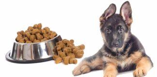 German Shepherd Dog Feeding