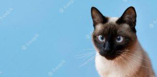 Types of Persian cat food